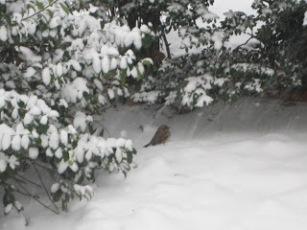 10milesbehindme_snow5