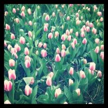 10milesbehindme_spring4