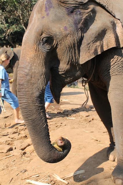 10milesbehindme_elephants1