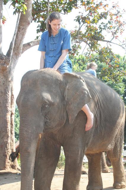 10milesbehindme_elephants10
