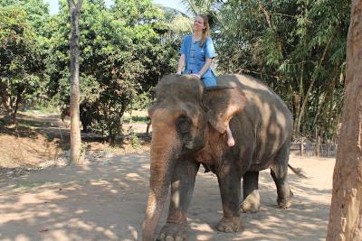 10milesbehindme_elephants11