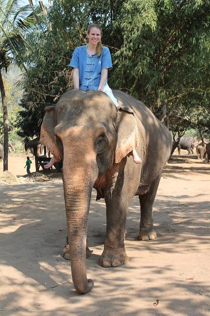 10milesbehindme_elephants13