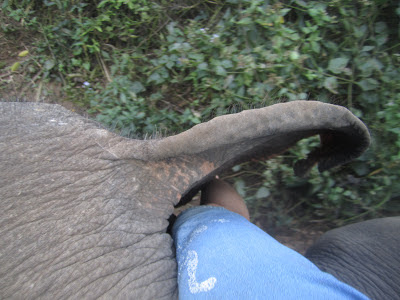 10milesbehindme_elephants15