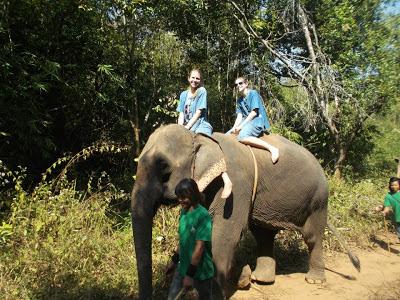 10milesbehindme_elephants16