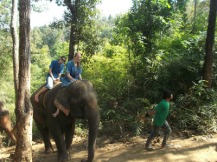 10milesbehindme_elephants17