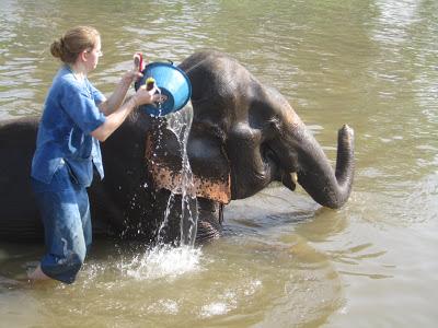 10milesbehindme_elephants19