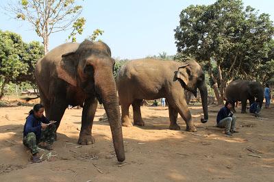 10milesbehindme_elephants2