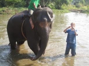 10milesbehindme_elephants21