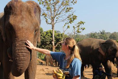 10milesbehindme_elephants4