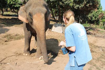 10milesbehindme_elephants7