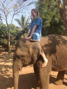 10milesbehindme_elephants8