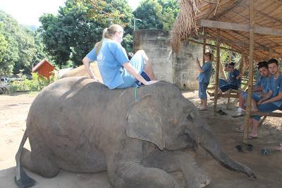 10milesbehindme_elephants9