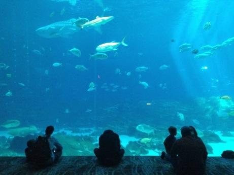 10milesbehindme_aquarium1