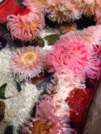 10milesbehindme_aquarium11