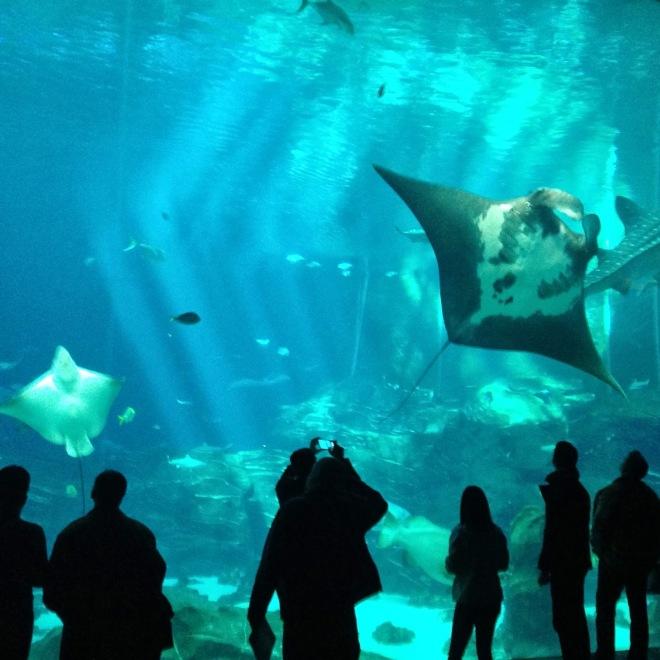 10milesbehindme_aquarium4