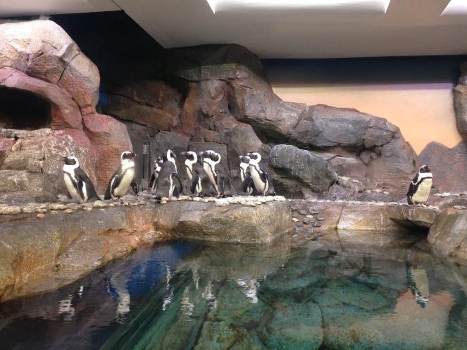 10milesbehindme_aquarium6