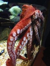 10milesbehindme_aquarium7