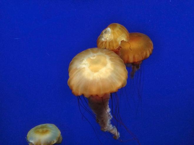 10milesbehindme_aquarium8