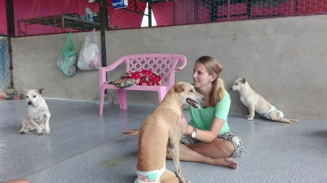 10milesbehindme_yangon_animal_shelter5