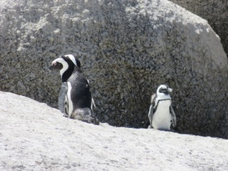 10milesbehindme_penguins11