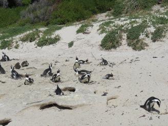 10milesbehindme_penguins13