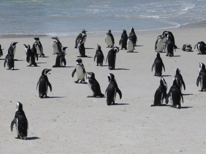 10milesbehindme_penguins15