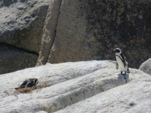 10milesbehindme_penguins4
