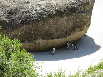 10milesbehindme_penguins5