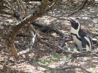10milesbehindme_penguins7