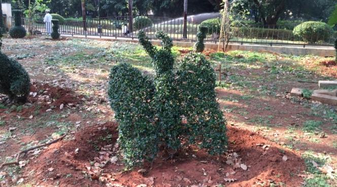 Lalbagh Botanical Gardens in Bangalore, Karnataka, India
